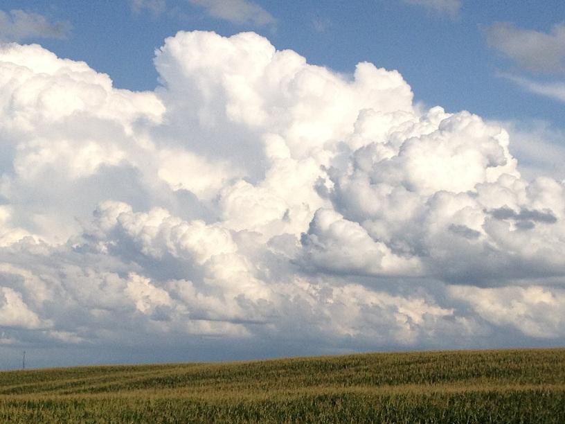 Crittendon County Corn Field