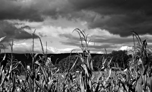 Storm and corn field