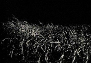 The corn by night