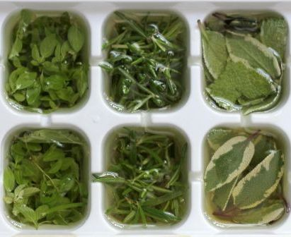 Fresh herbs ready for freezing