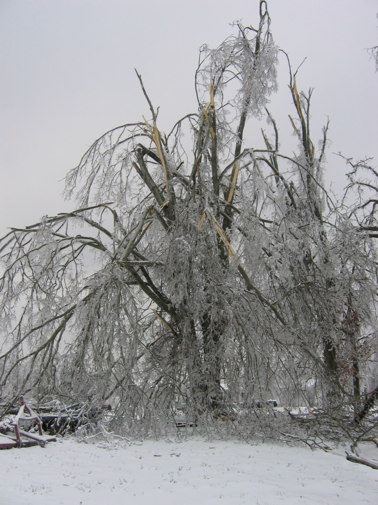 Kentucky's Historic Ice Storm Five Year Anniversary - We lost so many trees