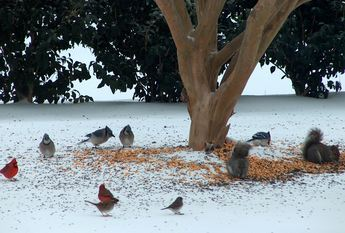 feed the birds in winter - just toss it on the ground