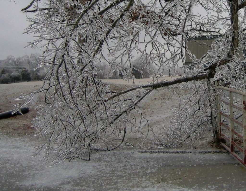 ice broke upon the pavement like glass