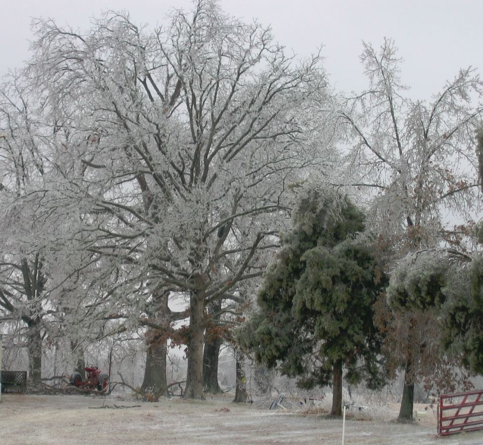 Kentucky Ice Storm Part 2 - trees of silver ice