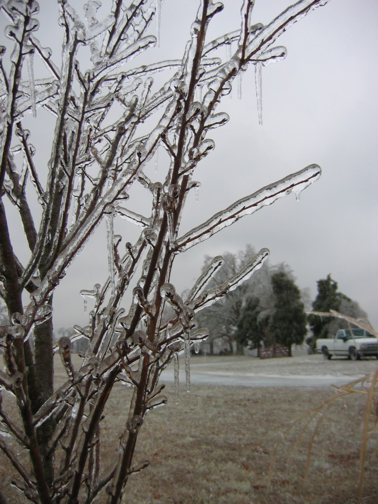 Kentucky Ice Storm Park 2 - twigs buried under ice